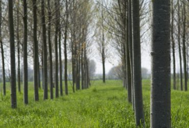 Busco comprar terreno para maderas forestales