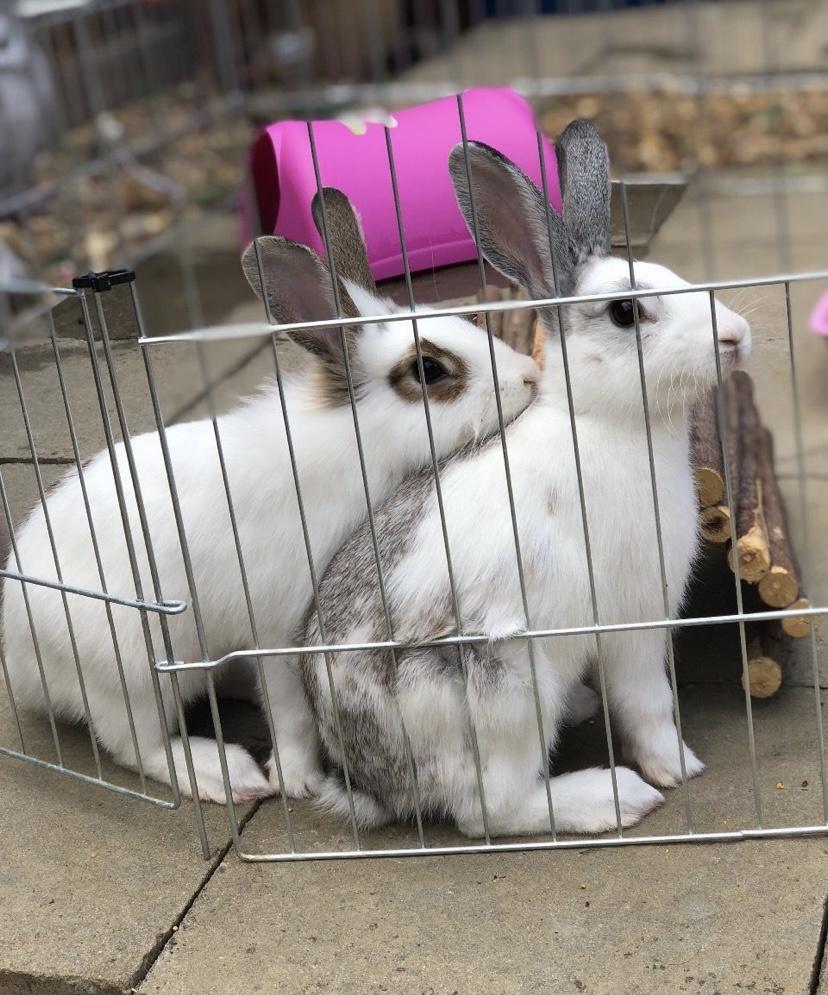 Conejos a la venta 🐇